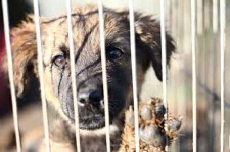 Rusza akcja - Daj piątaka dla zwierzaka