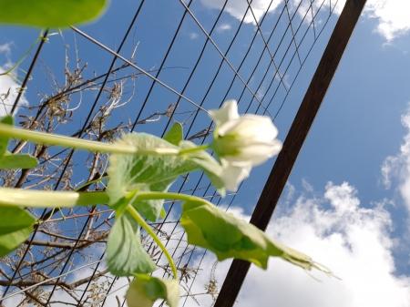 Doświadczenie z biologii - obserwacja wzrostu rośliny...